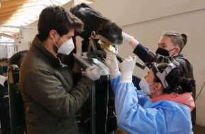 Zahnbehandlung beim Pferd