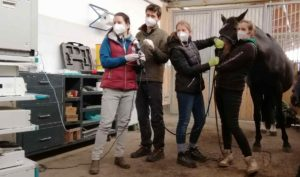 Bronchoskopie beim Pferd